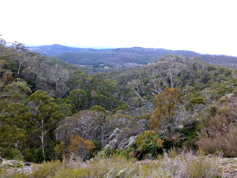 Mt-Canobolas-Vegetation
