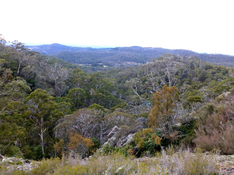 Mt-Canobolas-Vegetation